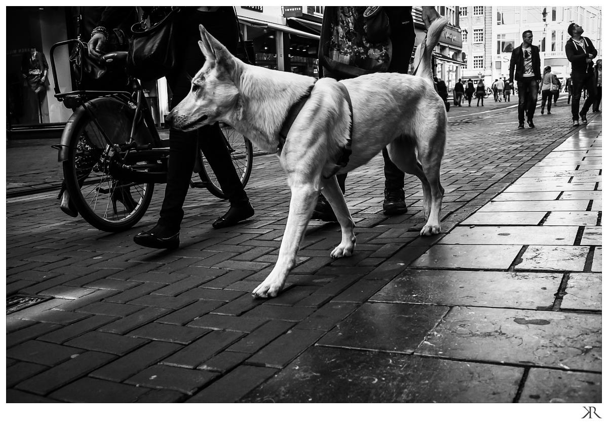 Amsterdam_street_london_wedding_photographer_kabilan29